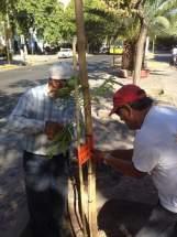 La reforestación se lleva a cabo con ejemplares de la especie Ibirá Pitá