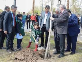 Plantaron varias especies arbóreas.